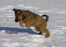 Jagd Im Schnee