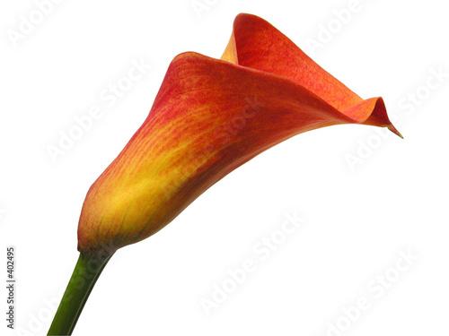 Fotografie, Obraz  flower
