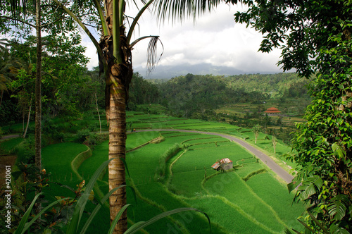 Dekoracja na wymiar indonezja-bali-krajobraz