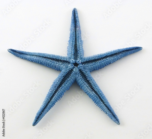 Canvas Print blue starfish