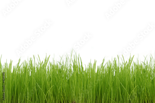 Deurstickers Gras green grass