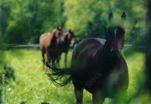 Canvas horses