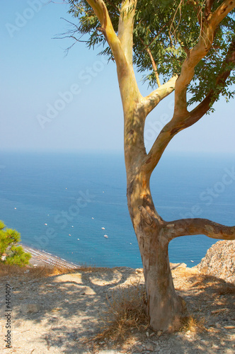 Motiv-Rollo Basic - olive tree, santorini, greece