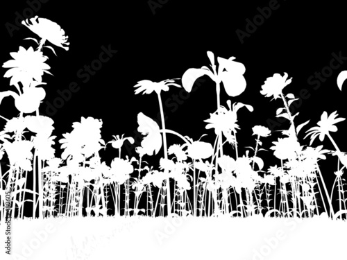 Poster Floral black and white the colors of spring