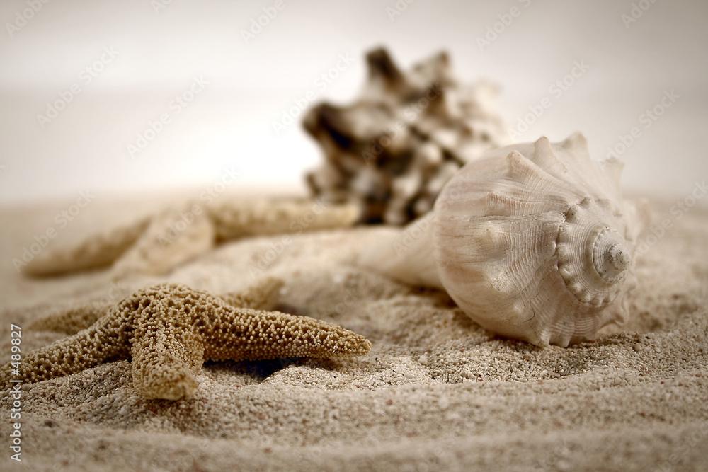 Fototapeta premium muszle na piasku