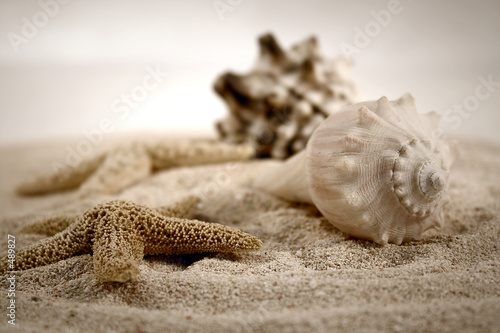 Naklejka premium muszle na piasku