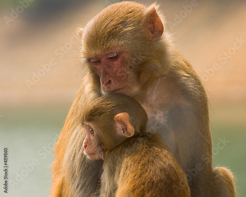 Foto-Kissen - monkey_5 (von Ka Leung Wong)