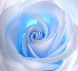 Obraz na Szkle Róże blue rose