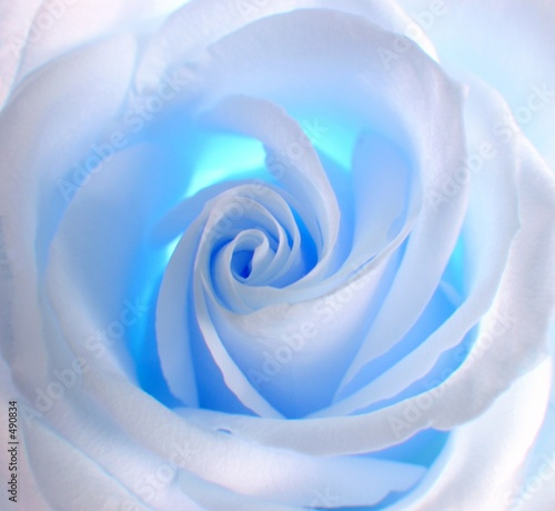 Naklejka dekoracyjna blue rose