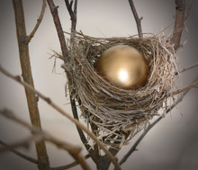 Nest Egg 2