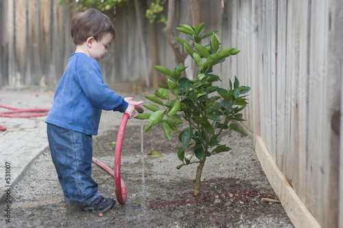 Fotografia, Obraz  boy watering tree