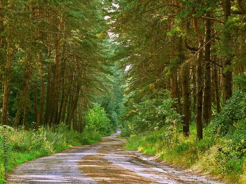 Foto op Canvas Weg in bos forest