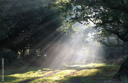 Spoed Foto op Canvas Bos in mist forest glade