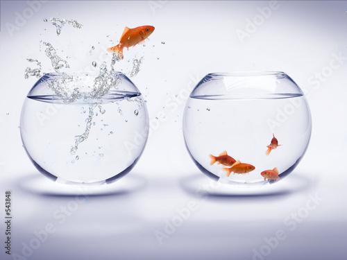 Fotografía  Rouge poisson dans un acuario de la ONU