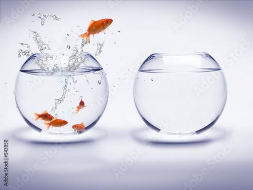 Foto-Schiebevorhang (ohne Schiene) - aquarium poissons rouges (von Simon Coste)
