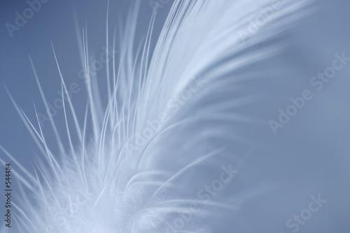 Türaufkleber Makrofotografie softness