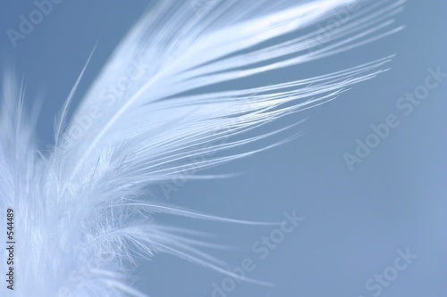 Türaufkleber Makrofotografie white feather
