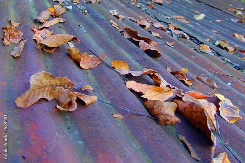 Foto op Aluminium Scandinavië autumn leaves on corrugated steel