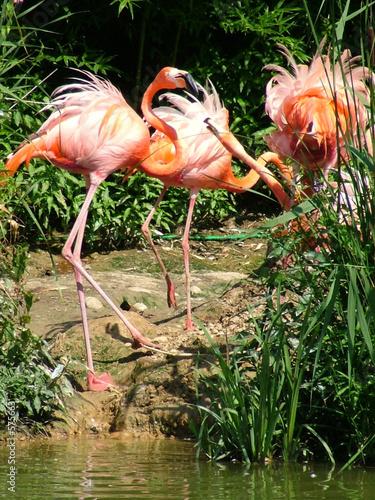 Garden Poster Parrot flamingos feeding