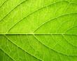 Leinwandbild Motiv leaf