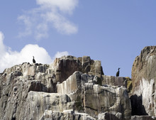 Seabirds On Guano Covered Cliff.