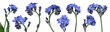 canvas print picture - forget-me-nots
