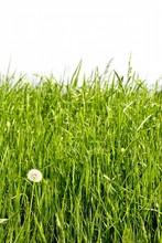 Grass Against Wall
