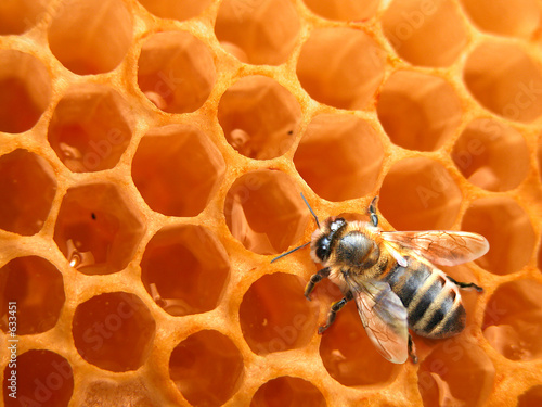 Papiers peints Bee bee on honeycomb