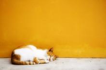 Cat Photo - Sleepy Kitty