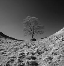 Hadrians Wall, Robin Hoods Tree