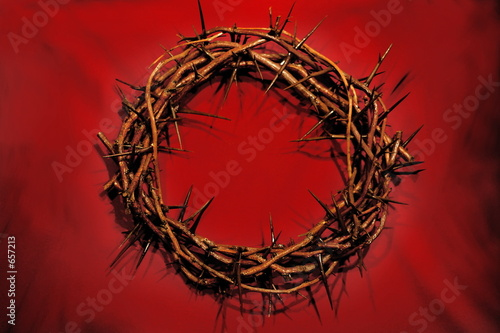 Fotografering crown of thorns