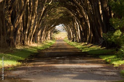 Tematy fototapet  tunel-cyprysowy