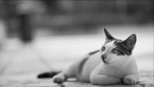 Cat Photo - Whimsical