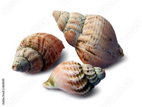 Foto-Stoff - shells