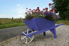 Wheelbarrow Beauty