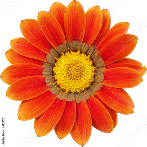 Photo Stands Gerbera gerbera orange