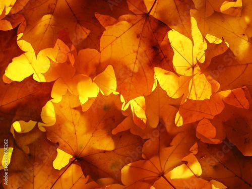 autumn leaves - 680262