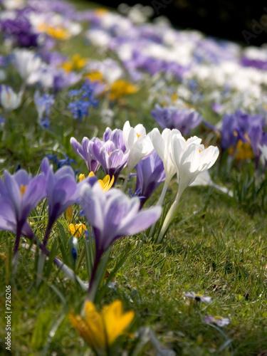 Fototapety, obrazy: frühlingsblumen