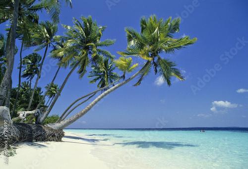 Fotografie, Obraz  maldives