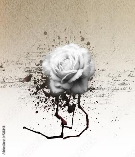 Foto-Rollo - vintae floral card illustration (von robert fori)