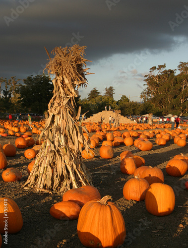 Valokuva  pumpkin farm before the storm