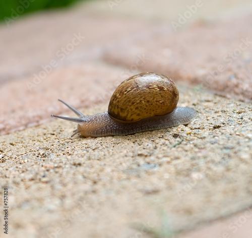 Valokuva  snail