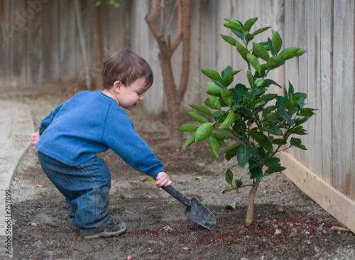 Fotografia, Obraz  planting a tree