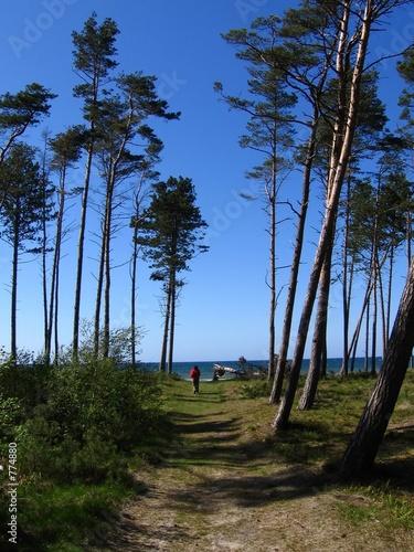 Fototapeta path to the sea obraz na płótnie