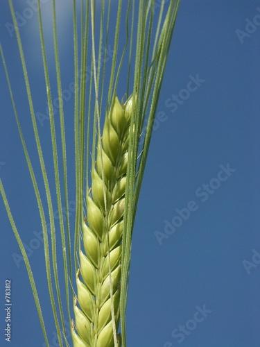 Un épi De Blé Buy This Stock Photo And Explore Similar Images At
