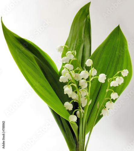 Wall Murals Lily of the valley a spring posy