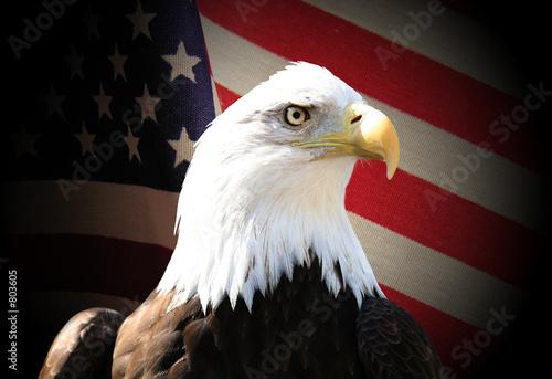 Poster Eagle eagle