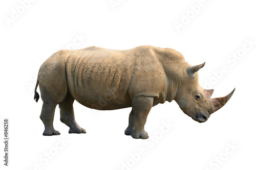 Spoed Foto op Canvas Neushoorn rhinoceros isolated