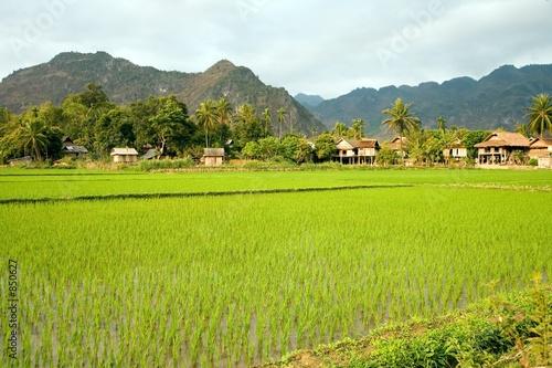 Poster Lime groen north vietnam landscape