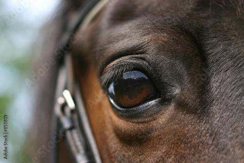 Photo  horse eye